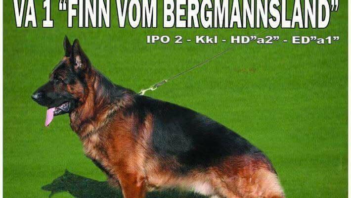 VA1 Finn Bergmannsland